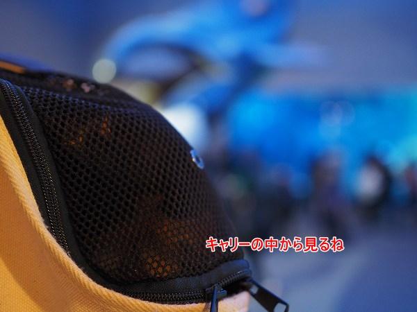 s-PC300179.jpg