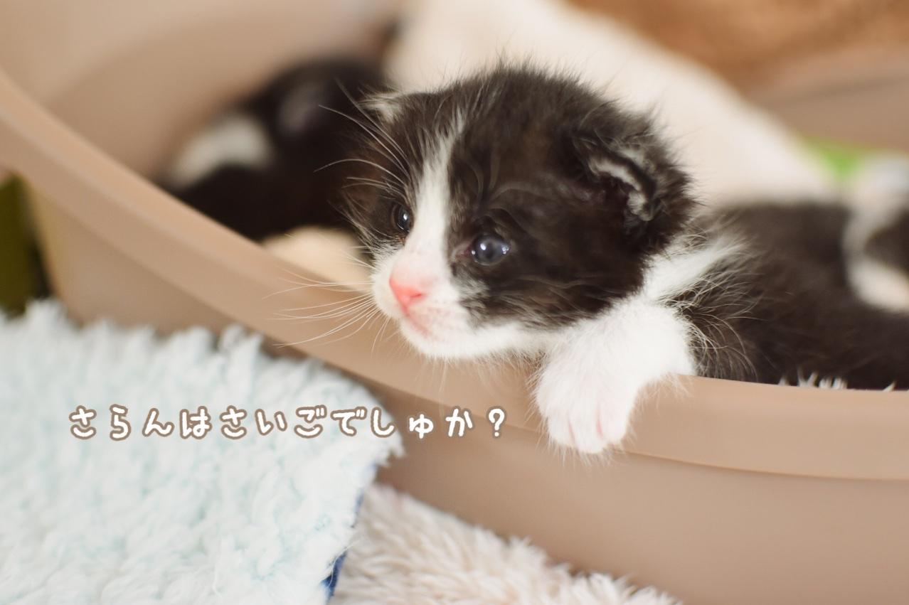 fc2blog_2020032312550694f.jpg