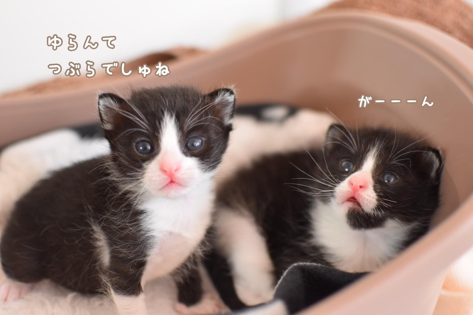 fc2blog_20200324133006fde.jpg