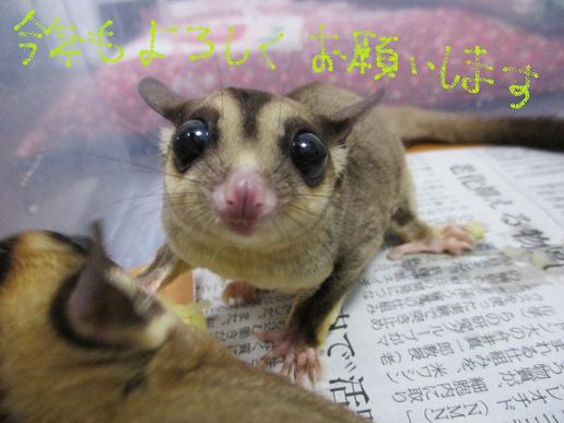 ライチちゃん♪202001012