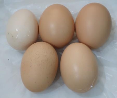 twin eggs (10)