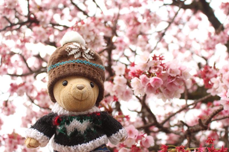 あたみ桜と 200207
