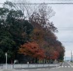 katarukaiIMG_E1521.jpg