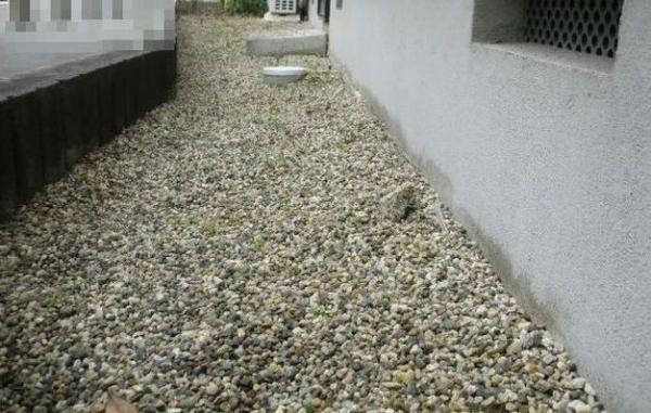 大掃除は11月から少しずつ3 外回りの草取り