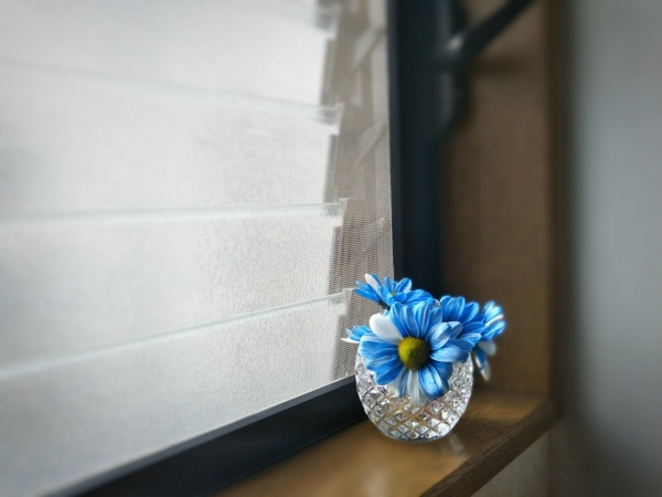 トイレの青い花