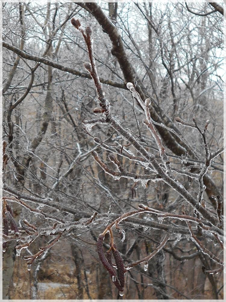 雨氷 2019年12月14日 1
