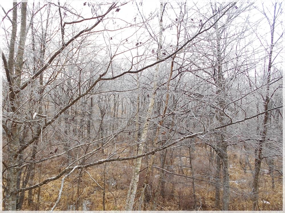 雨氷 2019年12月14日 2