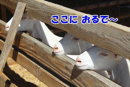 s-yagi200223-IMG_1163