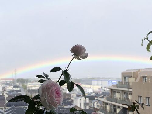 ブログ1026フンショウロウ&虹