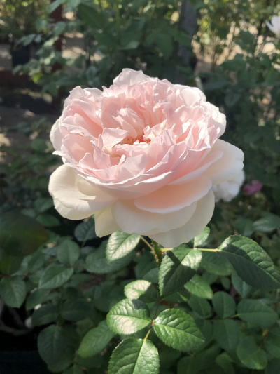 ブログ1102鏡花