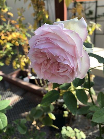 ブログ1221春乃
