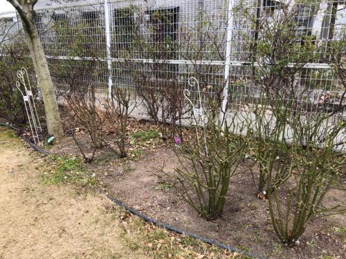 ブログ0215ロサオリの庭