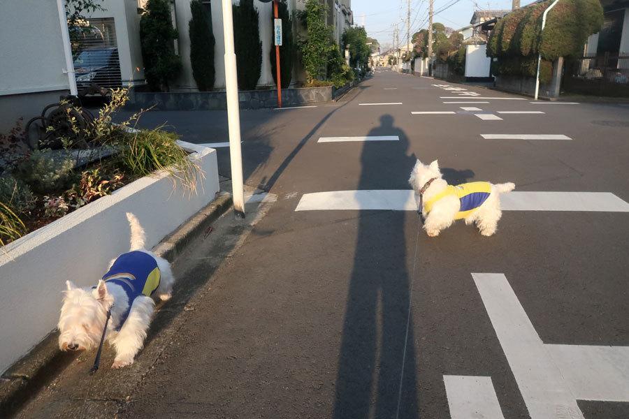 tokoyafurorenkyuakedebaku4.jpg
