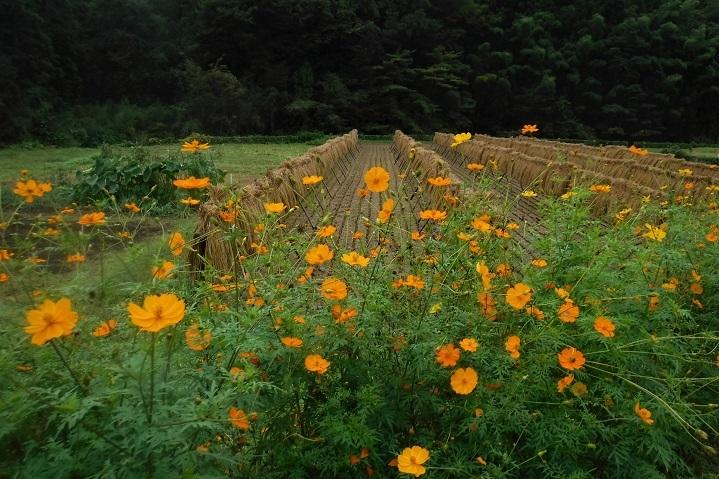1 19.9.24 官の倉山~石尊山 (31)