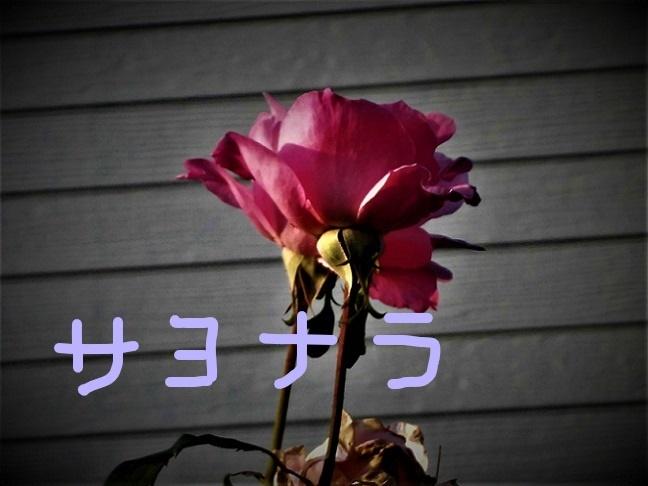 18.10.27 おいらく祭り (171)_LI