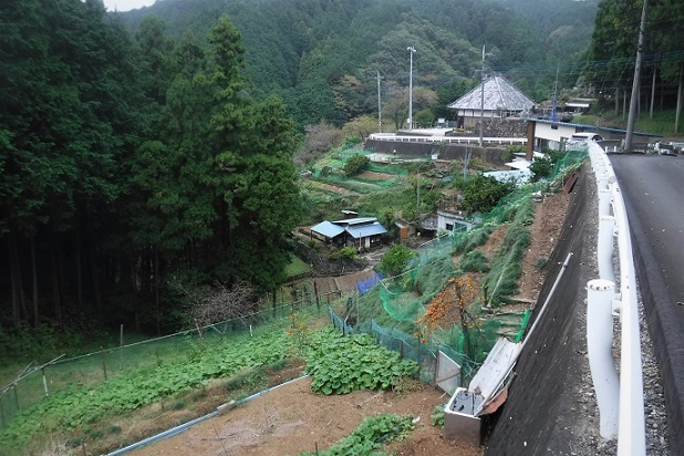 1 19.10.24 日和田山→五常の滝一人ハイク (54)