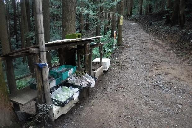 3 19.10.24 日和田山→五常の滝一人ハイク (84)