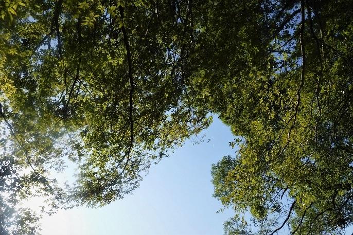 6 19.11.1 三橋散歩。映画浮雲 (42)