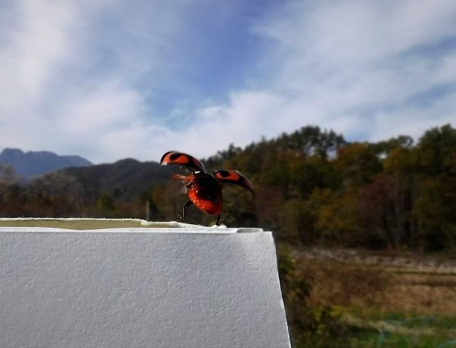 1 19.11.18-19 八ヶ岳スケッチハイク ➀ (68)