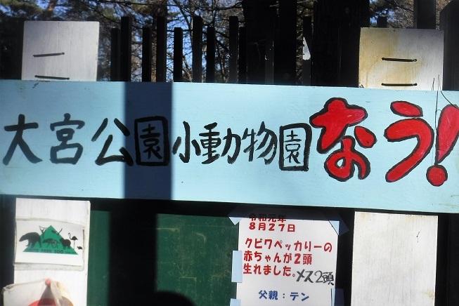 7 19.1.5 大宮 氷川神社・麦秋 (48)