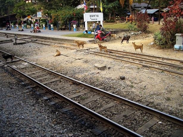 1 チェンマイ列車の旅2 037 (2)