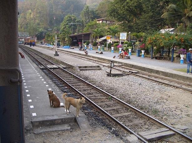 チェンマイ列車の旅2 027