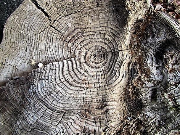 1 20.2.4 木の根、映画空海 象の背中 (14)