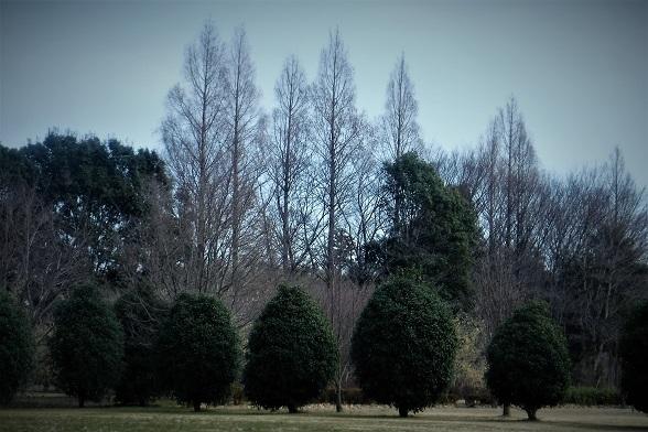 4 20.2.12 花の丘公園と森 (66)