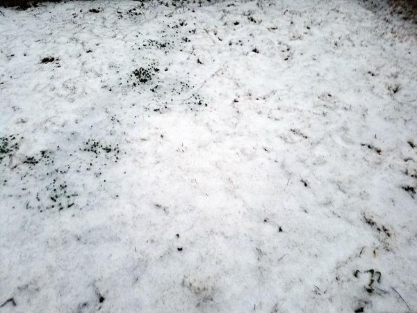 鹿児島雪1
