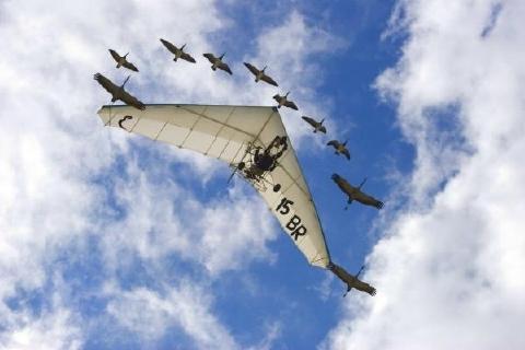 グライダーと雁の編隊飛行