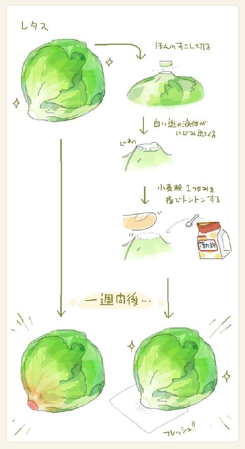 レタスの保存方法