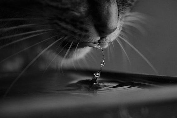 cat-4718495_1920.jpg