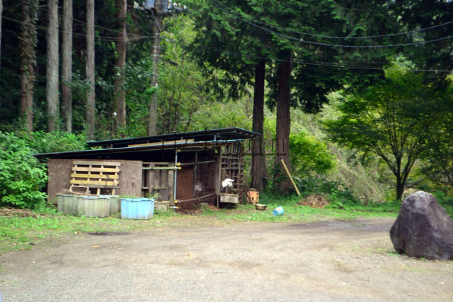 何がなんでもキャンプだし せせらぎ荘 キャンプ 天然記念物 ヤマネ