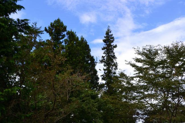 何がなんでもキャンプだし Glirulus japonicus せせらぎ荘 キャンプ ヤマネ 都留 天然記念物 いきものログ 環境省自然環境局 生物多様性センター 稀少生物 準絶滅危惧種  レッドリスト 山の守り神 山の妖精 生きた化石 富士山頂 八ケ岳 標高約2,500メートル以上  ハイマツ帯 14時の退出 ハイジ  ひとり1泊500円 和みの里 わくわく公園 和風コテージ 一位の宿 和みの里オートキャンプ場 道志みち 台風19号 椿荘 五輪競技