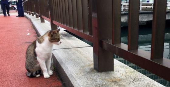 川に落ちた子猫を心配そうに見守る親猫とみられる猫=長崎市新地町で2019年10月1日午前8時25分