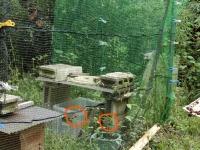 ネットの南側にスズメバチ2匹(20190926)