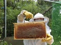 蜜蓋のしっかりかかったハチミツです♪(20190926)