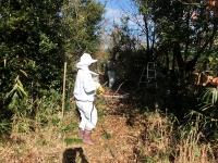 ミツバチの越冬準備だわ(20191223)
