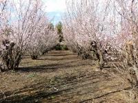 桜も満開(20201311撮影)