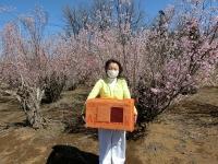 ミツバチちゃんお花の香に大興奮(20200311)