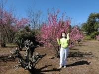 桃も満開♪(20200311)