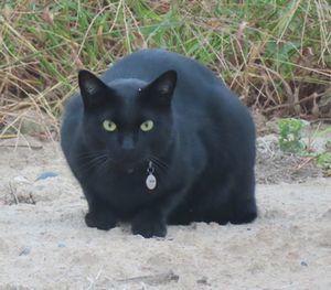 018黒猫a