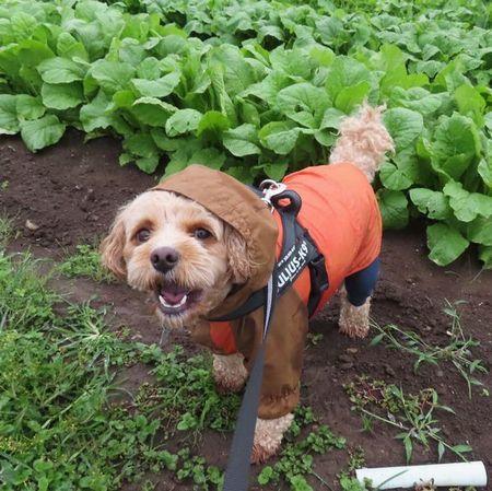 009野菜畑
