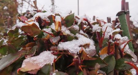 004水分の多い雪