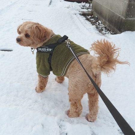 003初雪
