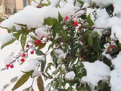 013南天に雪