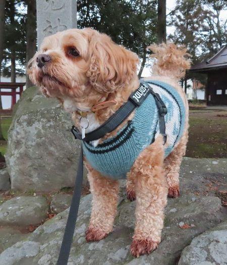 017手編みセーター