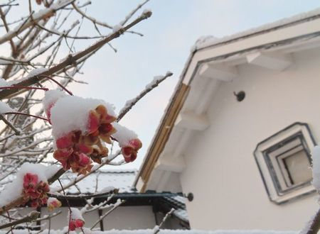 014雪マユミ