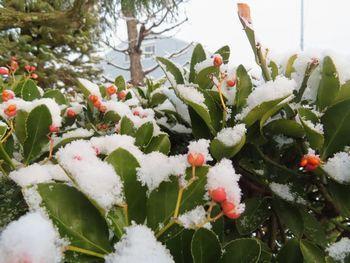 016雪マサキ