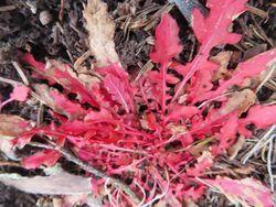 005赤い葉
